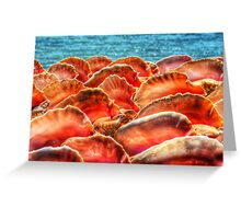 Conch Shells in Nassau, The Bahamas Greeting Card