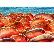 Conch Shells in Nassau, The Bahamas Photographic Print
