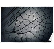 Macro dragonfly wing photo Poster