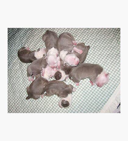 Sweet New Puppies Photographic Print