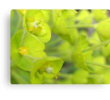 Soft green Irish bells Canvas Print