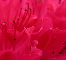 Rain water on red by ailsapm