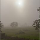 Foggy Morning on the Atherton Tablelands by Chris Cohen