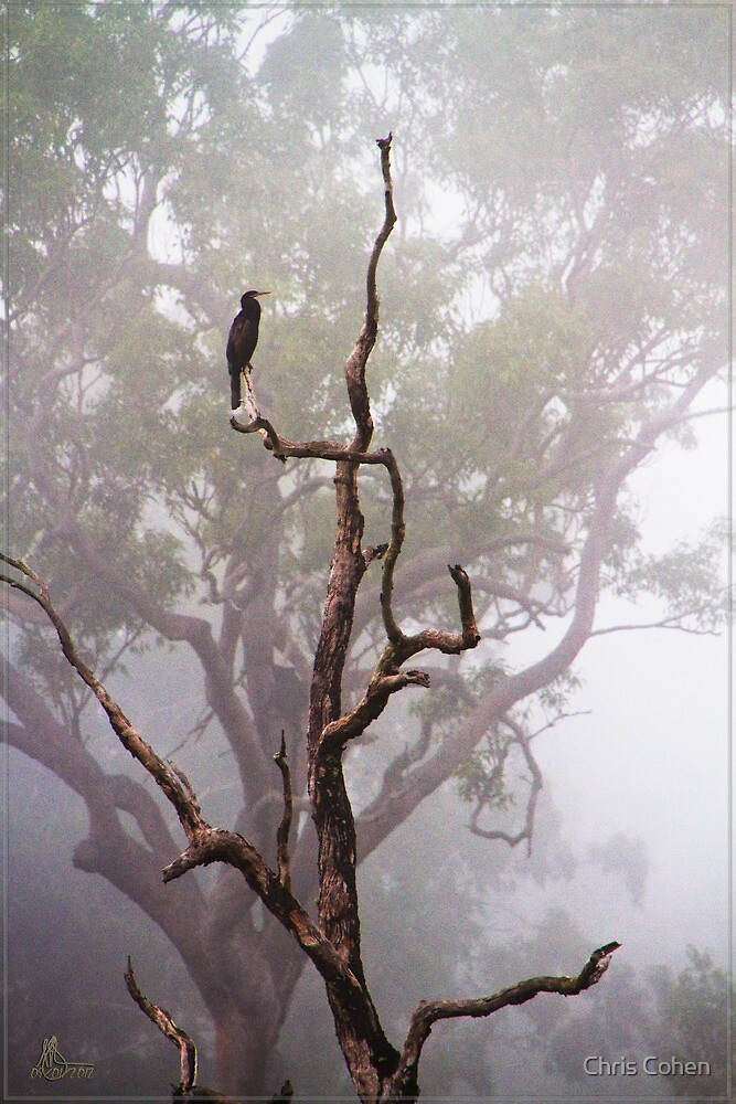 The Early Bird by Chris Cohen