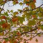 Autumn leaves at sunset by Jeanne Kinninmont