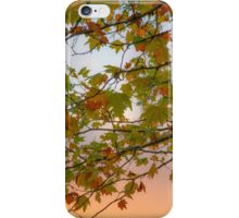 Autumn leaves at sunset iPhone Case/Skin