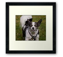 Dogs with game face on .11 Framed Print