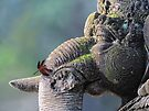 Ganesha with dragonfly by jimmy hoffman