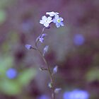 forget me not by CecilysSong