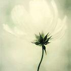 Solitude | iPad Case by beautifulcards