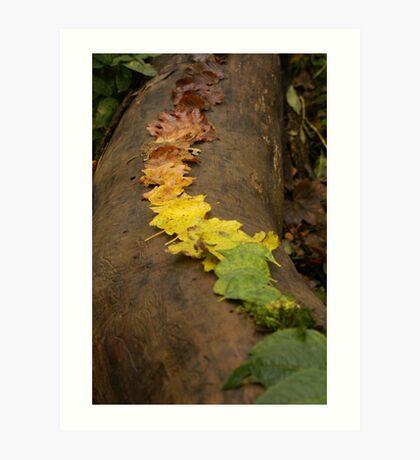 Autumn Leaf Trail Art Print