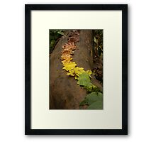 Autumn Leaf Trail Framed Print