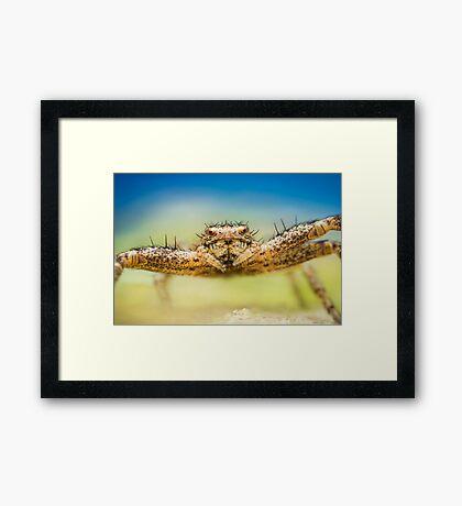 Crab spider extreme closeup Framed Print