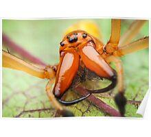 Cheiracanthium punctorium venomous spider extreme closeup Poster