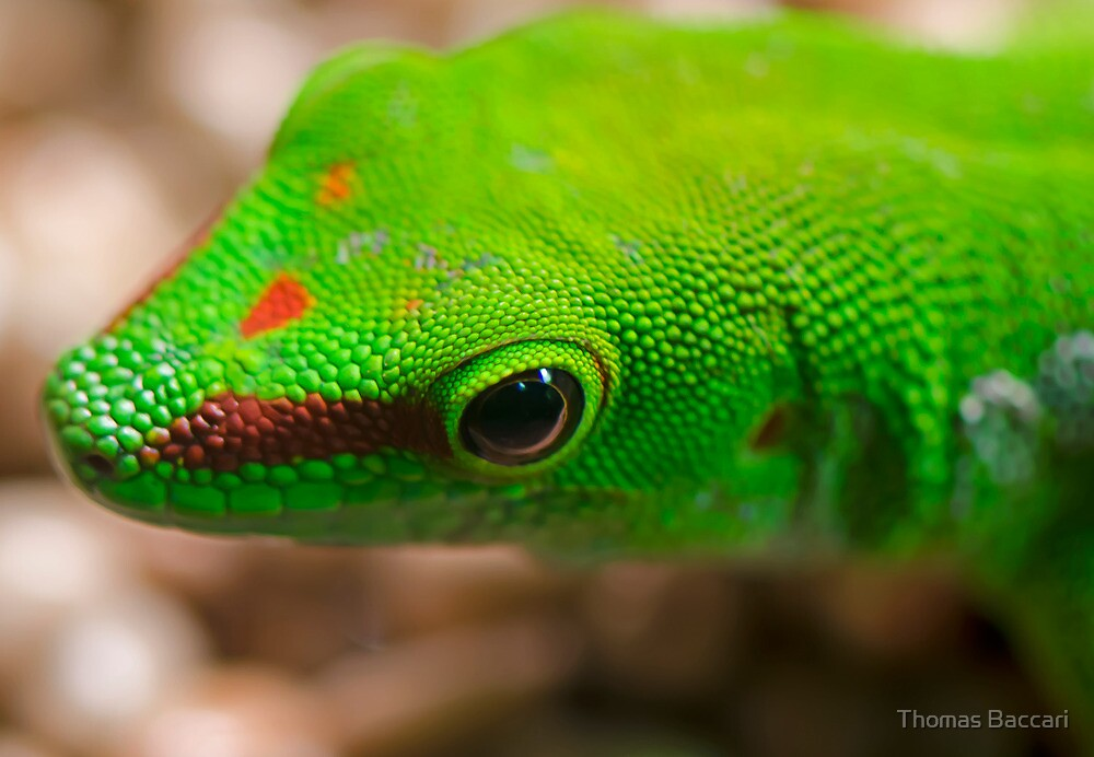 My Very Little Lizard Friend by TJ Baccari Photography