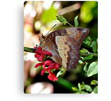 Butterfly Yoga Canvas Print