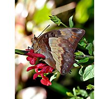 Butterfly Yoga Photographic Print