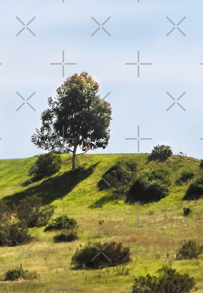 Solitary Tree On the Hill by Heather Friedman