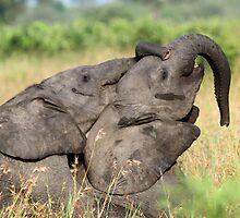 Trunk play ! by jozi1