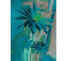 Kaktus Textured Flowers. Photographic Print
