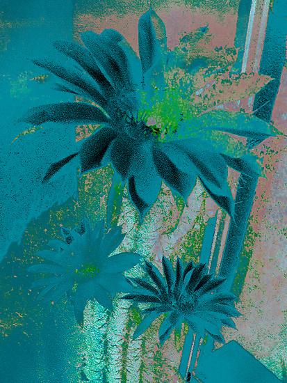 Kaktus Textured Flowers. by Vitta