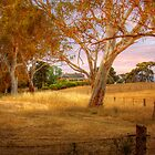 Dawsley III, Adelaide Hills SA by Mark Richards