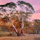 Nairne, Adelaide Hills SA by Mark Richards