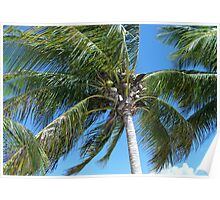 Central America Palm Poster