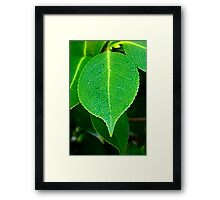 On a Limb Framed Print