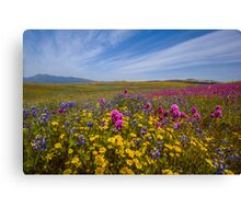 Spring Bouquet at Warner Springs Canvas Print