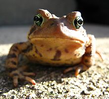 American Toad #3 by Stephen Oravec