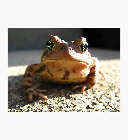 American Toad #3 Photographic Print