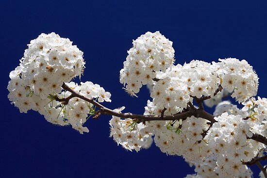 Blossoms In Blue by James Eddy