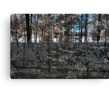 vineyard in early morning light Canvas Print