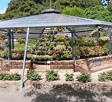 A Gazebo full of Geraniums & Pelargoniums, Botanic Gardens, Geelong. by Rita Blom