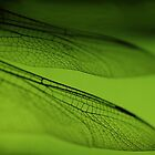 Dragonfly Wings by lib225