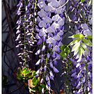 Got The Hang Of It - Wisteria by Michael May