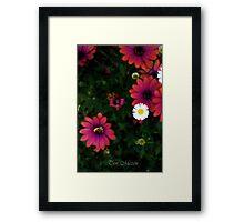Flowers looking down Framed Print