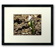 Sunflower Seedling Framed Print