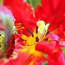 Spring Tulip by KatarinaD
