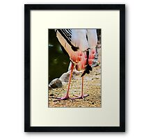 Pink Tail Feathers Framed Print