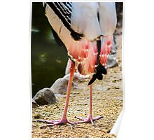 Pink Tail Feathers Poster