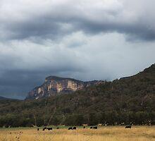 Glen Davis Mountains by Mandy  Harvey
