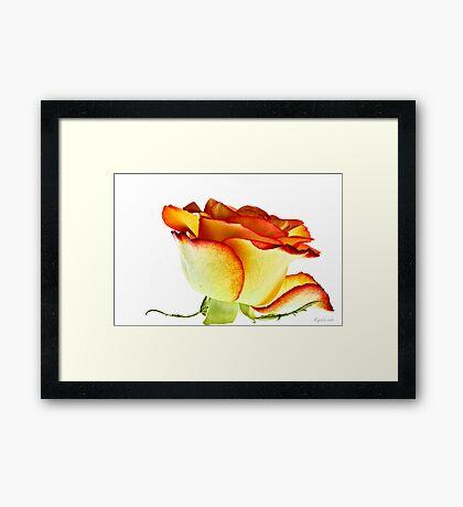 Anjali Framed Print