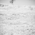 Little Tree on the Hill - Black and White by Natalie Kinnear