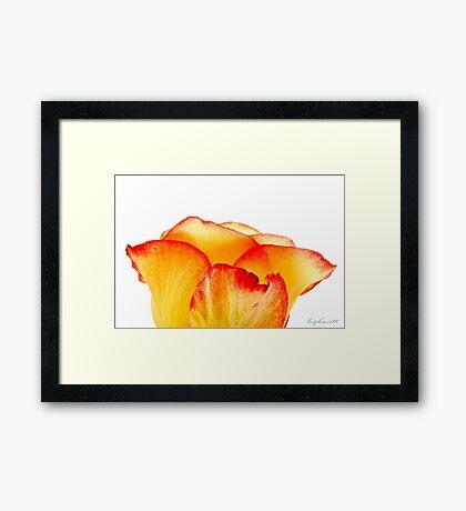 Tiarra Framed Print