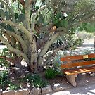 Come sit with me in the desert shade by nealbarnett