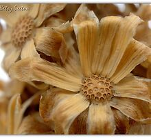 SERIES: WINTERED WONDERS 1 of 10 by Betsy  Seeton