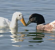 The Odd Couple by Nigel Bangert