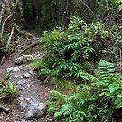 Tararua forest path, N.Z. by Mike Warman